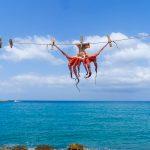 haven-inktvis-octopus-kreta