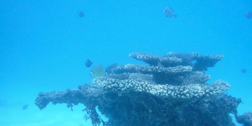 koraal thailand