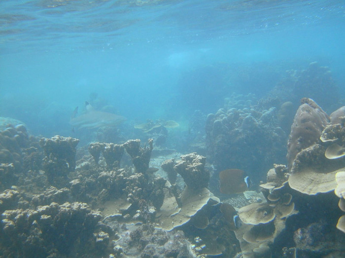 haai thailand
