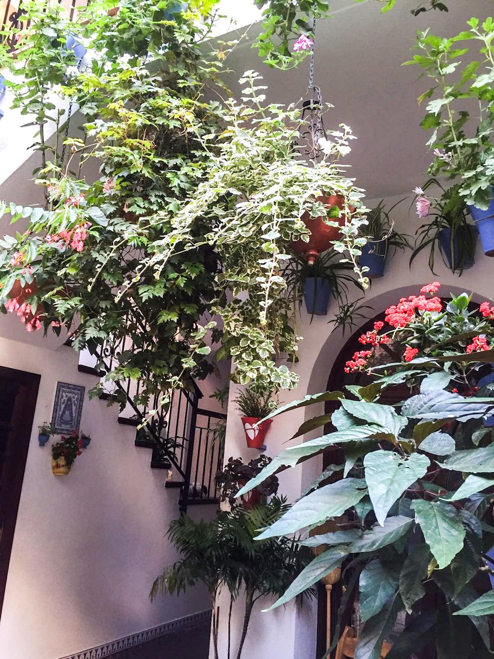 7 - festival in córdoba - romantische streken - straatje - bloemen