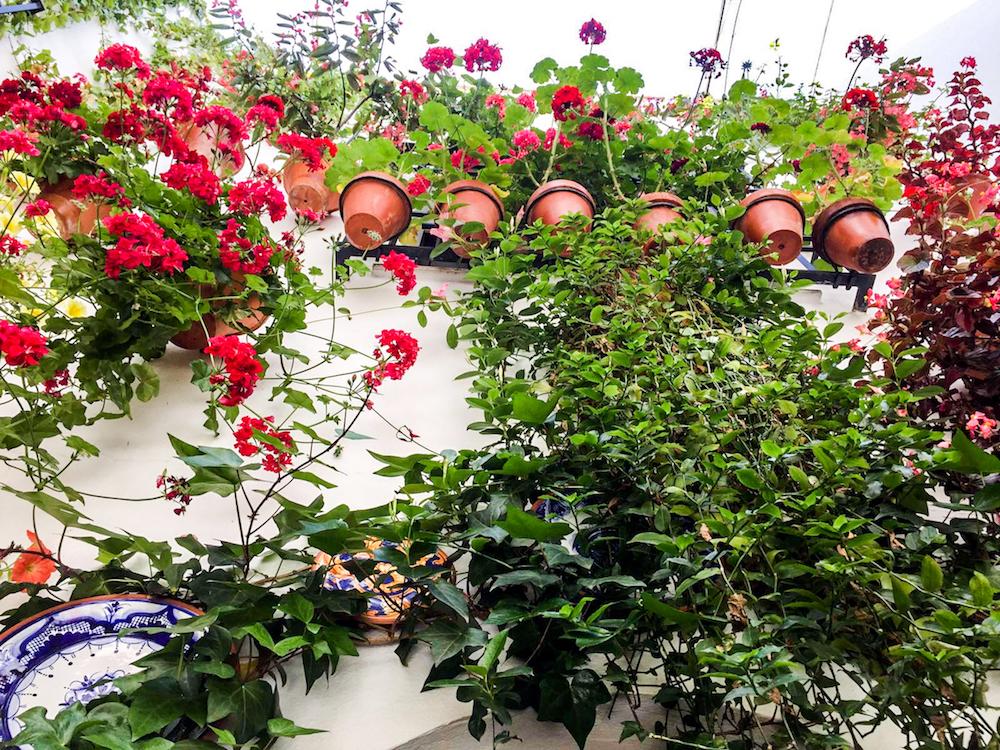- festival in córdoba - romantische streken - straatje - bloemen
