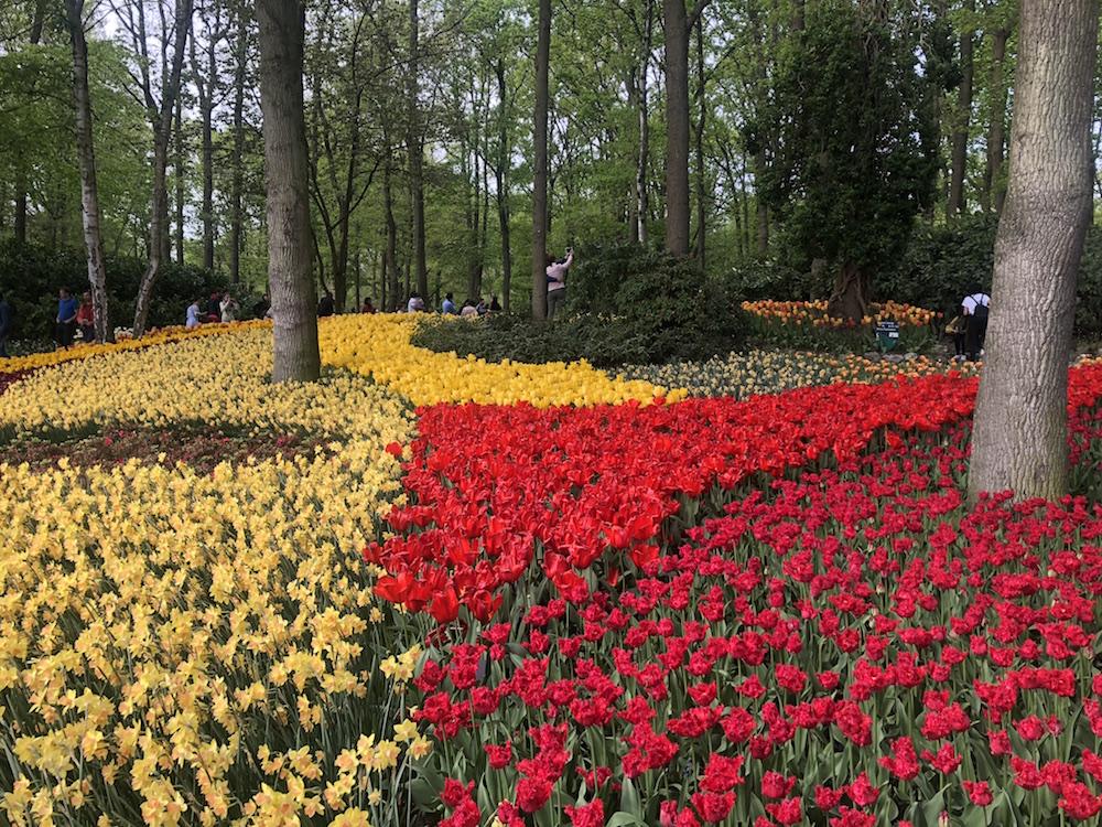 7 miljoen bloemen in Keukenhof, het mooiste bloemenpark van de wereld